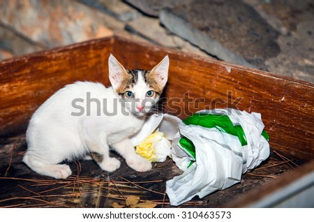 kitten looking for food in the trash - stock photo