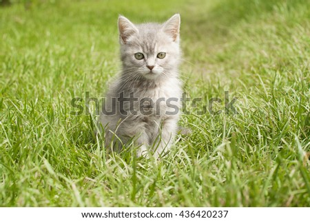 kitten looking into the camera - stock photo