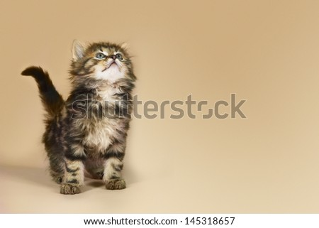 Kitten looking up against colored background - stock photo