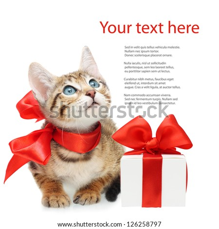 Kitten looking up with red bow and present box on a white background - stock photo