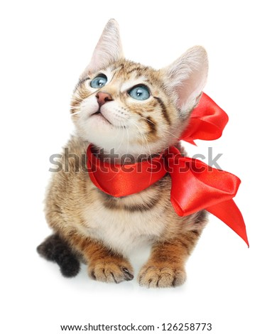 Kitten looking up with red bow on a white background - stock photo