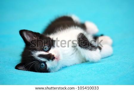 Kitten lying on the bed - stock photo