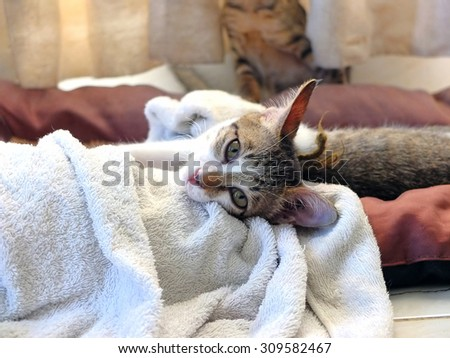 Kitten lying on white towel at home. - stock photo