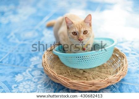 Kitten lying with basket - stock photo
