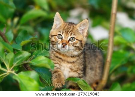 Kitten on a tree - stock photo