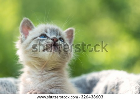 kitten on basket close up - stock photo