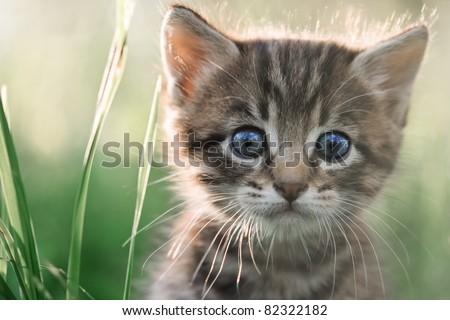 kitten on grass close up - stock photo