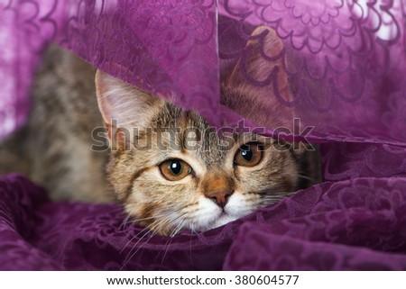 Kitten on purple background - stock photo
