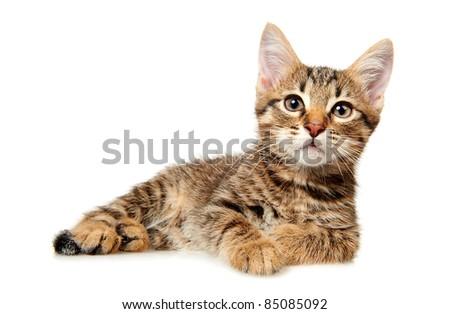 kitten on white background - stock photo