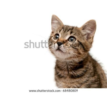 kitten on white background.  looks upwards - stock photo