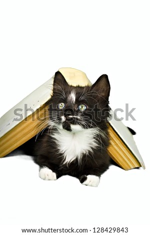 Kitten peering out from underneath book - stock photo