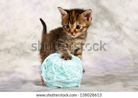 Kitten play with wool brown blue ball large fun - stock photo