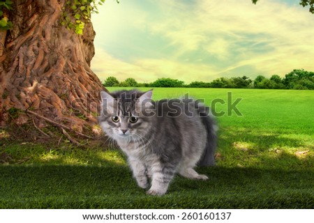 kitten playing in a summer sunny day on the grass under the old tree - stock photo