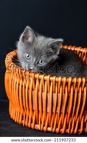 Kitten playing or hiding in a basket on an isolated black background - stock photo