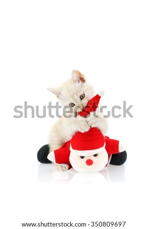 kitten playing santa doll on white background - stock photo