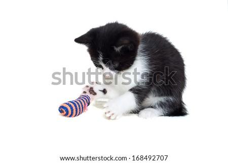 kitten playing toy - stock photo