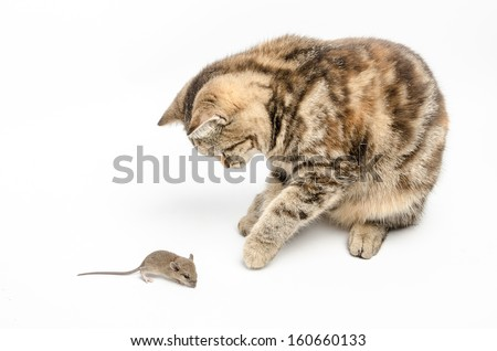 Kitten playing with a mouse - stock photo