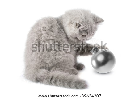 kitten playing with christmas ball isolated - stock photo