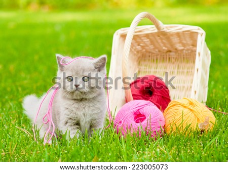 kitten playing with clews of thread on green grass - stock photo