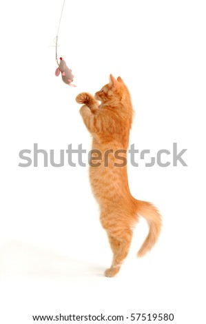 kitten playing with toy mouse isolated on white background - stock photo