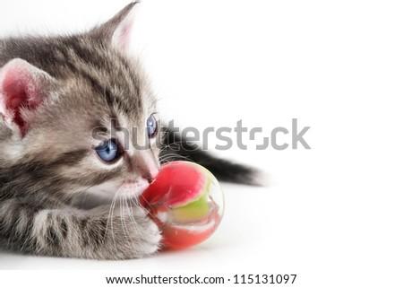Kitten plays with ball - stock photo