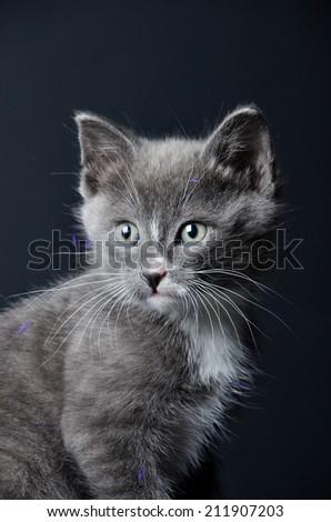 Kitten portrait on an isolated black background - stock photo