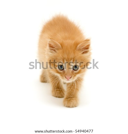 kitten red funny playful isolated on white background - stock photo