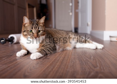 Kitten, resting cat on a flor in colorful blur background, cute funny cat close up, young playful cat at home, domestic cat, relaxing cat, cat resting, cat playing at home, elegant cat - stock photo