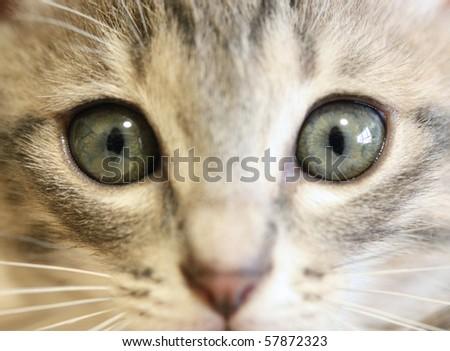 Kitten's face close-up - stock photo