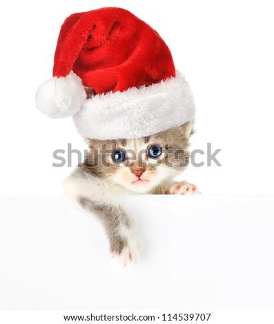 Kitten santa cap banner - stock photo