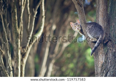 kitten sits on a tree branch in the forest - stock photo