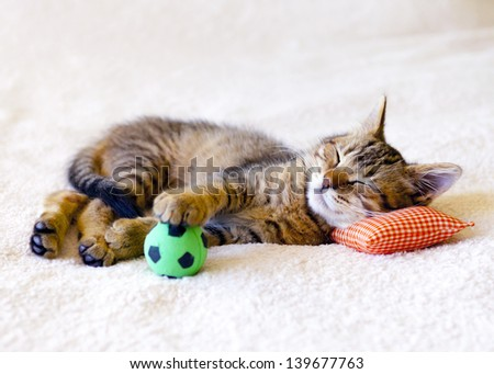 Kitten sleeping on a pillow with a soccer ball - stock photo