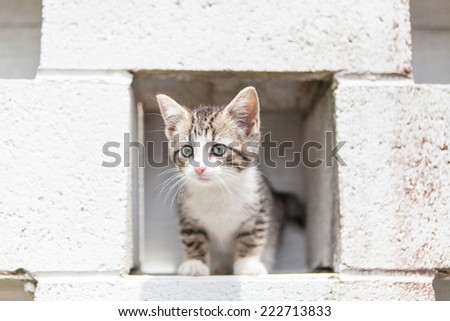 Kitten stands in the opening of brick wall - stock photo