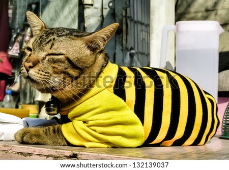 Kitten wearing a black and yellow Pullover - stock photo