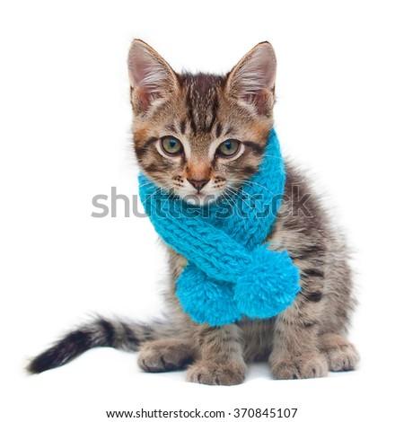 Kitten wearing a scarf - stock photo