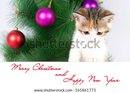 kitten with a bulletin board and Christmas text - stock photo