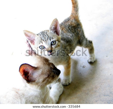kitten with a monther cat - stock photo