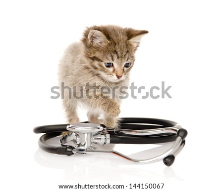 kitten with a stethoscope. isolated on white background - stock photo