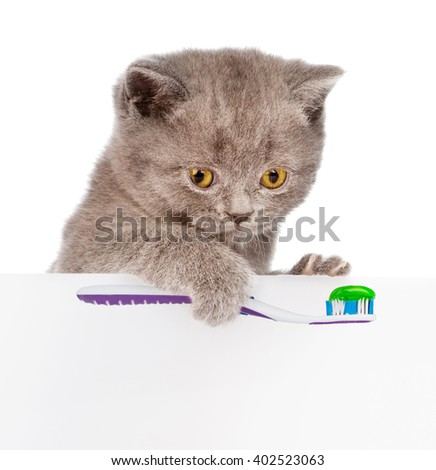 kitten with a toothbrush looking out because of the poster. isolated on white background - stock photo