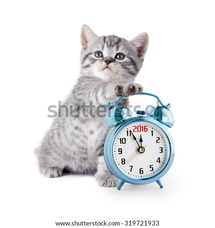 kitten with alarm clock displaying 2016 year - stock photo