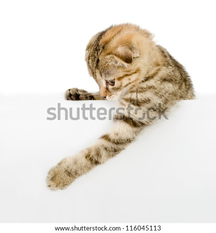 kitten with empty board. isolated on white background - stock photo