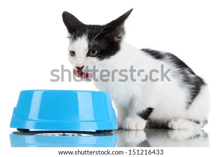 Kitten with food bowl isolated on white - stock photo