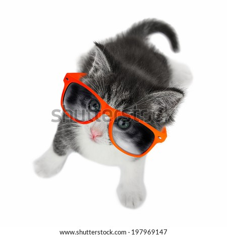 Kitten with glasses looking up on white background. - stock photo
