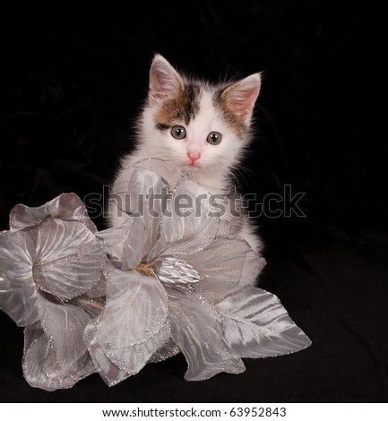 Kitten with silver flower - stock photo