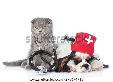Kitten with stethoscope on his neck and Cocker Spaniel puppy wearing nurses medical hat. isolated on white background - stock photo
