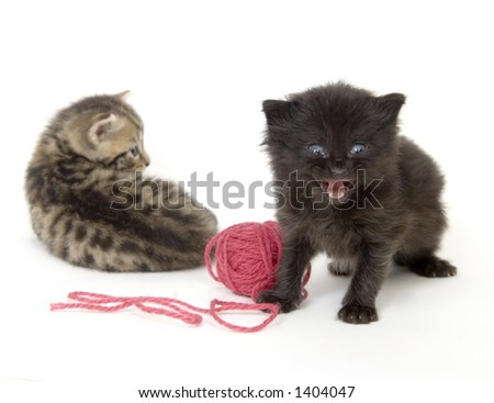 Kittens and a red ball of yarn on a white background. These kittens are being raised on a farm in central Illinois - stock photo