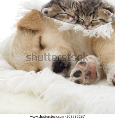 kittens and puppy sleeping - stock photo