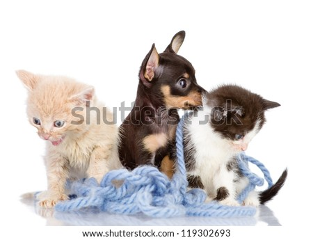 kittens and the puppy dog. isolated on white background - stock photo