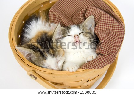 Kittens in a basket on a white background - stock photo