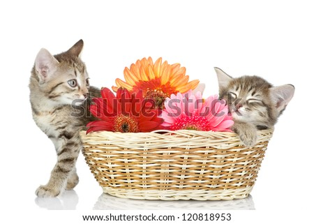 kittens in a basket with flowers. isolated on white background - stock photo